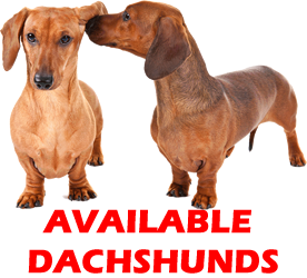 availabledachsicon